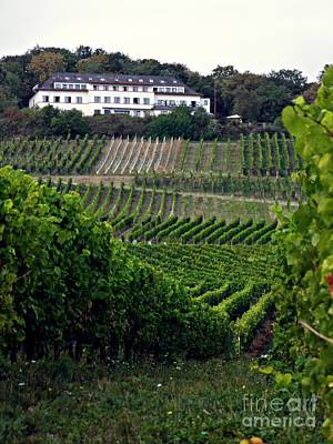 A Vineyard Above Rudesheim 1                       Art Print by Sarah Loft
