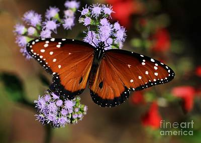 Queen Butterfly Photograph - A Visit From The Queen by Sabrina L Ryan