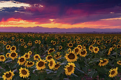 Photograph - A Vivid Colorado Sunflower Sunset by John De Bord