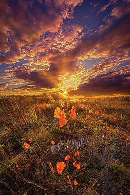 Photograph - A Voice Of Calm In The Stillness by Phil Koch