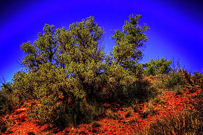 Photograph - A Vortex Juniper Near Sedona Arizona by Roger Passman
