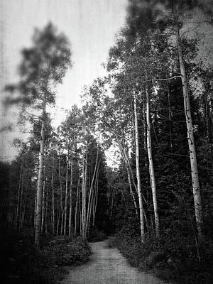Photograph - A Walk Amongst The Aspens Bw by David King