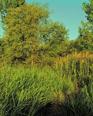 Jordan River Photograph - A Walk Amongst The Reeds by David King