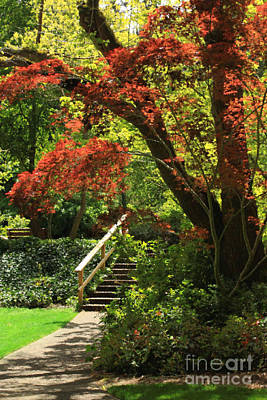 Photograph - A Walk In Lithia Park by James Eddy