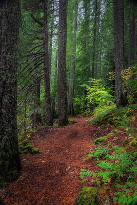Photograph - A Walk In The Forest by Cat Connor
