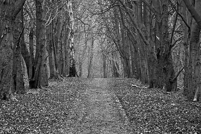Photograph - A Walk In The Forest by Inge Riis McDonald