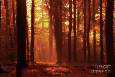 Photograph - a walk in the Forrest by Gerhard Hoogterp