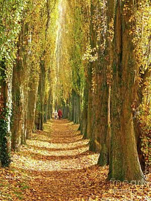 A Walk In The Poplars Art Print by Alex Cassels