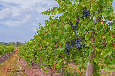 Photograph - A Walk In The Vineyard by CR  Courson