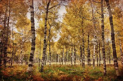 Photograph - A Walk In The Woods Part II  by Saija Lehtonen