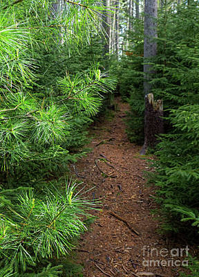 Photograph - A Walk In The Woods, Porter Preserve, Boothbay, Maine  -70673 by John Bald