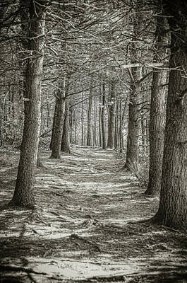 Photograph - A Walk In Walden Woods by Ike Krieger
