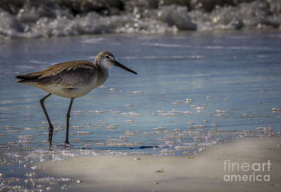 Heron Photograph - A Walk On The Beach by Marvin Spates
