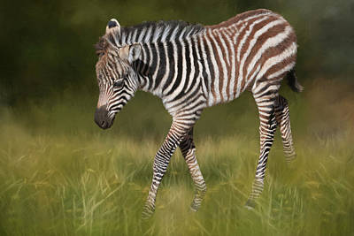 Zebra Photograph - A Walk On The Wild Side by Donna Kennedy