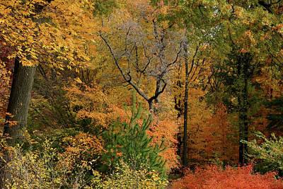 Photograph - A Walk Through Autumn by Cate Franklyn