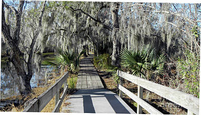 Photograph - A Walk Through Jean Lafitte Nat'l Park by Rosanne Licciardi
