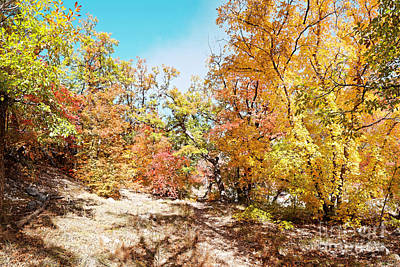 Photograph - A Walk Through The Maple Forest Deep In Mckittrick Canyon - Guadalupe Mountains National Park Texas by Silvio Ligutti