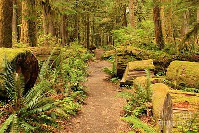 A Walk Through The Rainforest Art Print by Carol Groenen