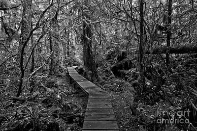 Photograph - A Walk Through The Willowbrae Rainforest Black And White by Adam Jewell
