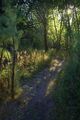 Photograph - A Walk Towards The Sun by David King