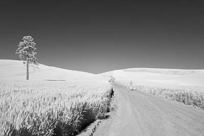 Photograph - A Walk With My Dogs by Jon Glaser
