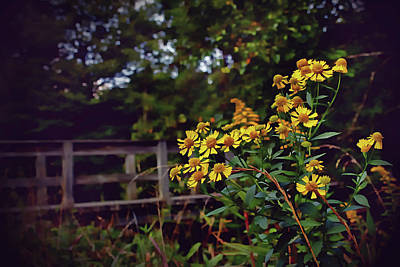 Photograph - A Walk With Wildflowers by Jessica Brawley