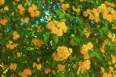 Photograph - A Wall Of Yellow Flowers by Bonnie Follett