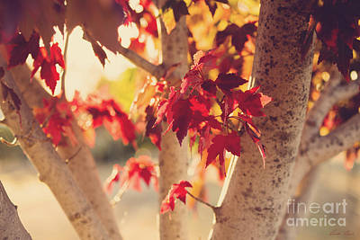 Photograph - A Warm Red Autumn by Linda Lees