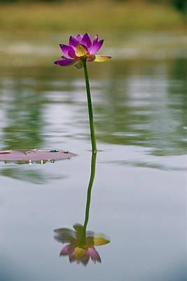 A Water Lily Bloom In An Australian Art Print by Jason Edwards
