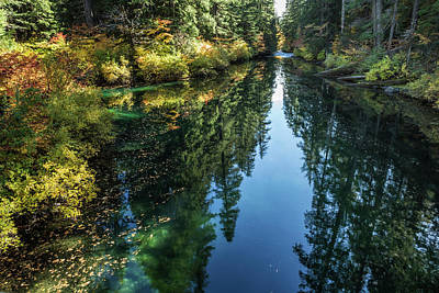 Photograph - A Watery Avenue Of Trees by Belinda Greb