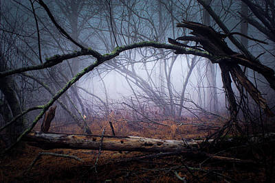 Photograph - A Way Out Of The Dismal Forest by Douglas Barnett