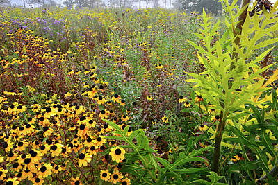 Photograph - A Web Of Wildflowers At Brookdale by Ray Mathis