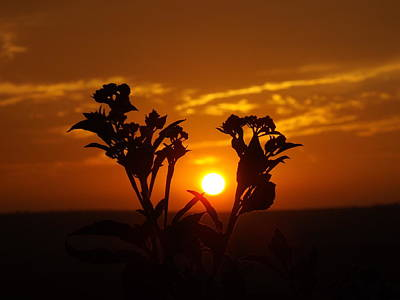Photograph - A Weed Sunset by Rebecca Cearley