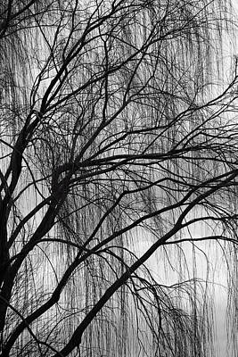 Photograph - A Weeping Willow In Black And White by Cora Wandel