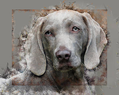 Digital Art - A Weimaraner by Anthony Murphy