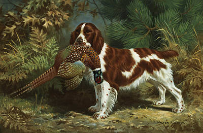 Artist Working Photograph - A Welsh Springer Spaniel Holds A Dead by Walter A. Weber