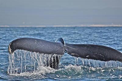 A Whale Of A Tale Art Print