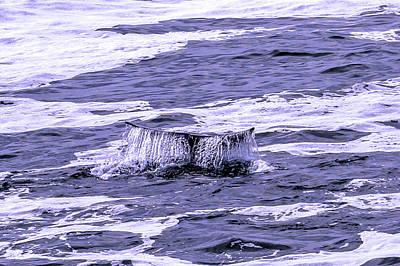 Photograph - A Whale Tail by Bob Johnson