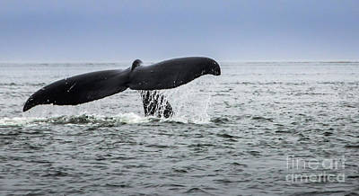 Photograph - A Whales Tale by Joann Long