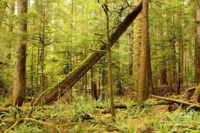 Forest Floor Photograph - A Whisper In The Rainforest by Carol Groenen