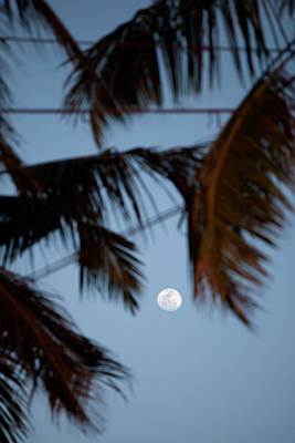 Photograph - A White Full Moon Shines Between Palm Tree Leaves by Regina Koch