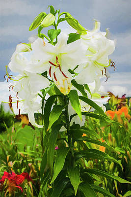 Digital Art - A White Lilly Standing Tall. by Rusty R Smith