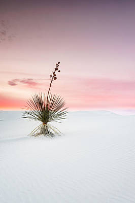 Sand Dunes Photograph - A White Sands Yucca Under Dreamy Sky - New Mexico by Ellie Teramoto