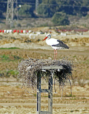 Photograph - A White Stork by Rod Jones