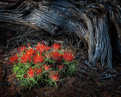 Photograph - A Wild Bouquet by Michael Ash