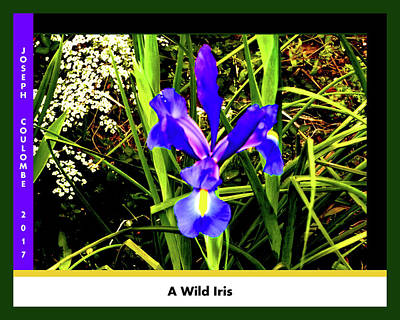 Digital Art - A Wild Iris by Joseph Coulombe