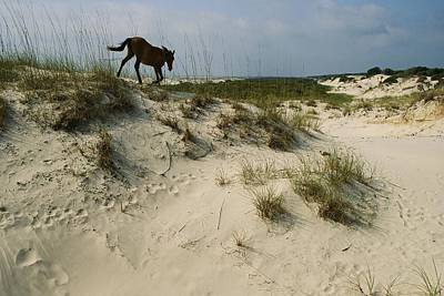 Natural Forces Photograph - A Windblown Wild Horse Traverses by Melissa Farlow