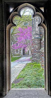 Photograph - A Window To Spring At Princeton University by Dave Mills