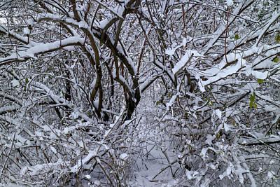 Photograph - A Winter Bramble by Scott Kingery