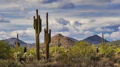 Photograph - A Winter Day In Arizona  by Saija Lehtonen